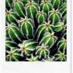 Pollice verde: piccoli trucchi per innaffiare le piante