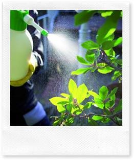 Anticrittogamico naturale per il giardino l infuso di for Organizzare il giardino di casa