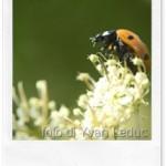 Insetticidi naturali per il giardino: la soluzione saponosa