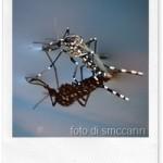 Estate: repellente contro le zanzare per tutta la famiglia
