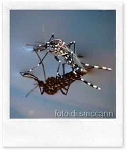 Come difendersi dalle zanzare in modo ecologico