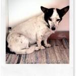 Integratore per cani contro i parassiti