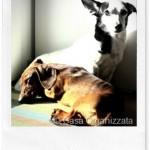 Polvere antiparassitaria naturale per cani, gatti e ambienti