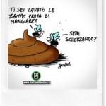Ricetta fai da te repellente per mosche naturale