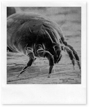 Come difendersi dagli acari della polvere
