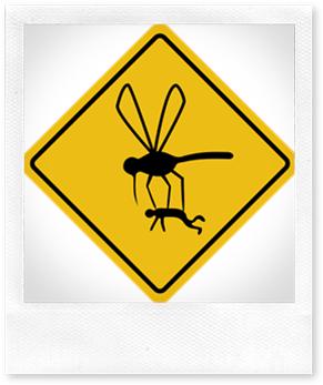Rimedio veloce, economico e naturale per le punture di zanzara