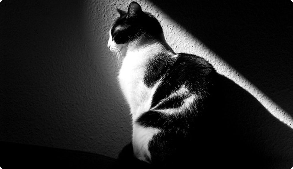 cat-288536_640.jpg