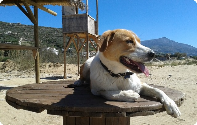 Come organizzare le vacanze con il cane