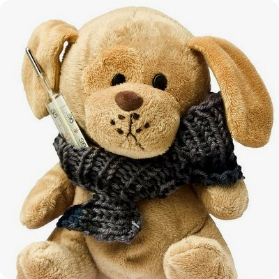 teddy-242878_960_720