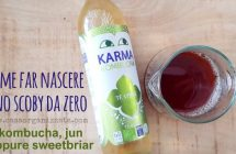 Come far nascere uno scoby da zero kombucha, jun, sweetbriar