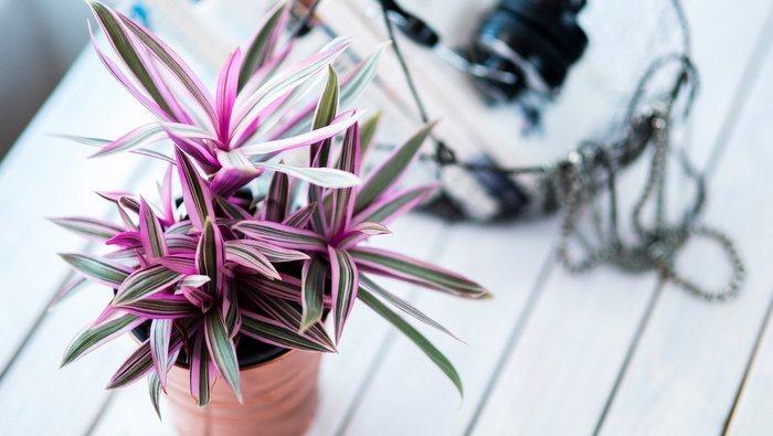 Anche le piante le posso acquistare con il cashback, sia online che nei negozi fisici
