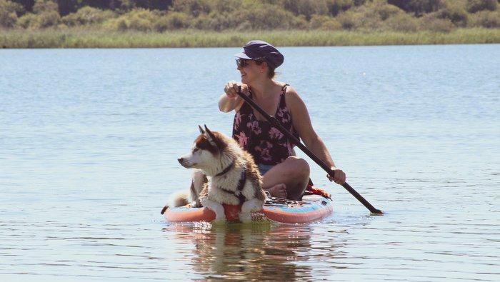 I cani e il caldo consigli utili per non avere problemi d'estate